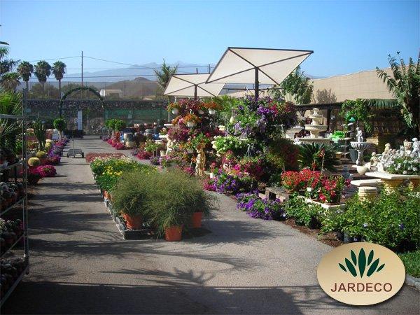 Garden center jardeco arona tenerife sur islas canarias for Centro de jardineria
