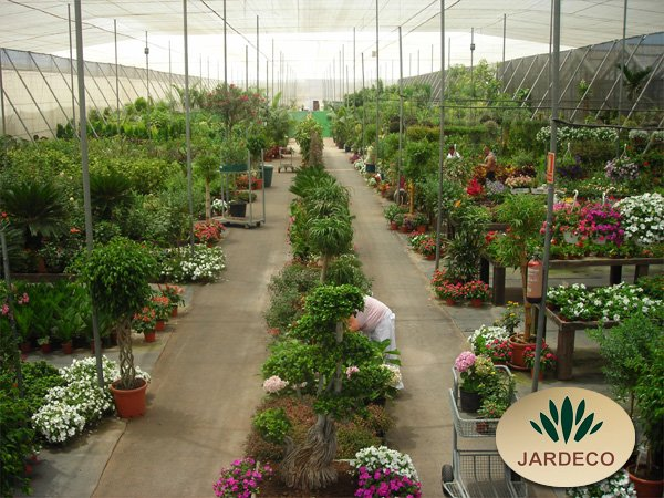 Garden center jardeco arona tenerife sur islas canarias teneriffa centro de - Jardin caleta tenerife sur ...