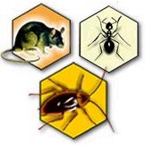 Control integral de plagas en santa cruz de tenerife for Control de plagas tenerife